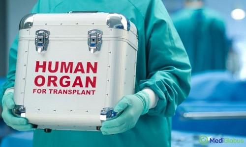 трансплантология за границей